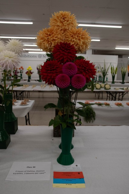 A stunning variety display of Purple, Red and Orange Dahlias
